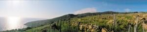アルトゥーラの崖沿いにある美しいテラスの畑