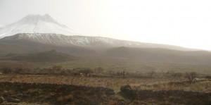 高い山々のふもとに広がるブドウ畑