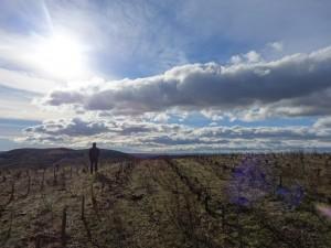 標高の高い畑、エスタケット