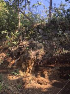 ミロ村の土壌